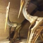 Dinozaur zburator (Pteranodon)